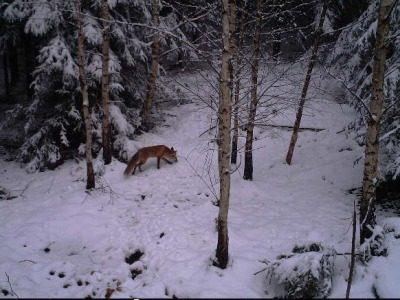 Lov Lyšky